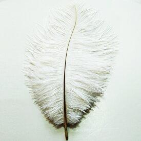 オーストリッチ小 15-25cm (白) この羽根はディスプレイ、アクセサリー、ヘットドレス等に使用されてます。