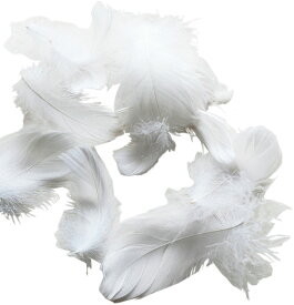 コキール(ホワイト) この羽根はディスプレイ、アクセサリー、ヘットドレス等に使用されてます。