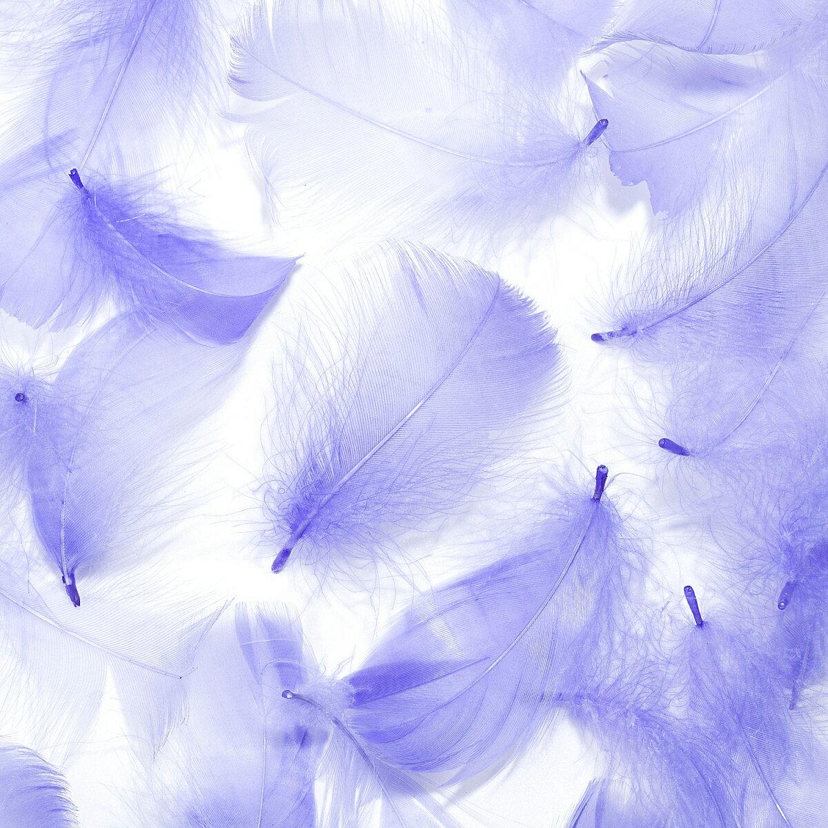 コキール(パープル) この羽根はディスプレイ、アクセサリー、ヘットドレス等に使用されてます。
