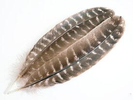 フライマテリアル ターキークイル 2本 [029-Qu-N] ナチュラル/羽根 羽毛 材料 釣り 毛針 毛鉤 タイイング パーツ フェザー