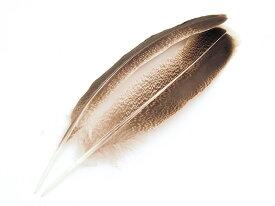 フライマテリアル ターキークイル 2本 [029-Qu-SPE] スペックルド/羽根 羽毛 材料 釣り 毛針 毛鉤 タイイング パーツ フェザー