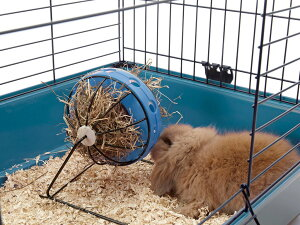 【SAVIC】ベルギーからおしゃれなペット用品が日本上陸!ベルギーサヴィッチ社製 ウサギの餌箱 バニートイ【うさぎ フェレット ハムスター 小動物ケージ】