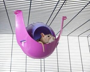 【SAVIC】ハウスにもハンモックにもなる球体型のハムスターハウスです。ベルギーサヴィッチ社製 ハムスターハンモック スプートニクXL fushia/violet 【うさぎ ラビット ハムスター フ