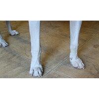 【アメリカPAWWASH】お散歩後のわんちゃんの足を簡単にきれいにできる優れもの!パウウォッシュブラッシュレスボトルS