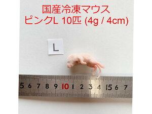 国産 高品質 冷凍マウス ピンクL 10匹 サイズ目安 4g、4cm、ピンクマウス 爬虫類 猛禽類 肉食魚 哺乳類 ヘビ トカゲ