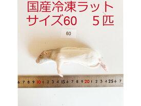 国産 高品質 冷凍ラット サイズ60 5匹 爬虫類 猛禽類 肉食魚 哺乳類 ヘビ トカゲ ハリネズミ