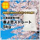 【アーリーサマー】北海道産強力粉 春よ恋ストレート 5kg(旧名称:春よ恋100)【RCP】