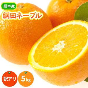 最高傑作!《柑橘の女王》村田さんの愛情と元気で育てた網田ネーブルオレンジ(熊本歴史の特産 網田熟ネーブル大・中・小混合)5kg 【訳あり】【送料無料】(蔵出し熟ネーブル)熊本か