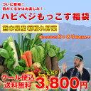 野菜セット 送料無料 気まぐれ野菜増量中! 福袋野菜セット どっさり野菜箱いっぱい詰め込みます!