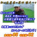 【送料無料】新米30年産新潟県佐渡産コシヒカリ【精米】25kgふっくらと炊き上がり、つや、粘り、味三拍子揃った佐渡産…