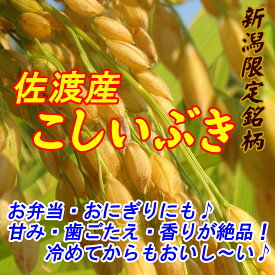 【送料無料】新米令和1年産新潟県佐渡産こしいぶき玄米30kg炊き上がりのツヤが良く、粘りがあり、コシヒカリに匹敵する食味を持っています。*北海道・九州区域は別途送料500円が掛かります。