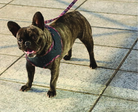 【犬 秋冬 】ペット リード デニム ハーネスとおそろい イタリアペット用品メーカーCROCILEASH PERU