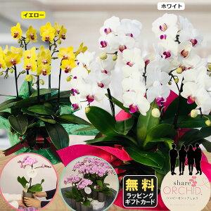 ミニ胡蝶蘭 シェアオーキッド 7号5F (5人分) ※ラッピングあり 鉢 花 プレゼント 母の日 父の日 敬老の日