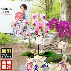 胡蝶蘭 ミニ ミディ胡蝶蘭 yukata de 胡蝶蘭 4号鉢植え 1本立て ピンク ライトピンク 花 プレゼント 母の日 父の日 敬老の日