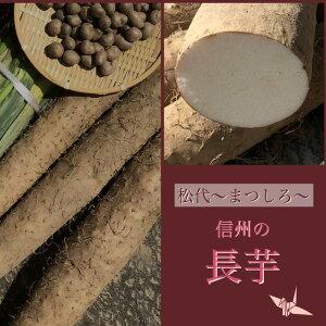 御年賀 ギフト 長芋 信州 松代特産長芋 秀品贈答用 7kg(3本)