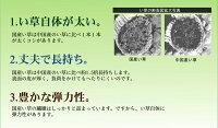 純国産ユニット畳「安座」江戸間1畳88×176×2.2cm