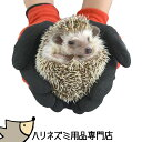 ゆうパケットOK◆はりねずみを持っても痛くない!厚手コーティング手袋◆はりねずみ 飼育用品◆【stock-asnr】