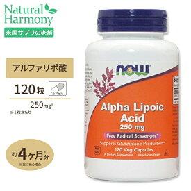 アルファリポ酸 250mg 120粒 NOW Foods(ナウフーズ)【ポイントUP2倍対象★1/24 17:00-2/3 9:59迄】