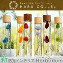 ハーバリウム プレミアムタイプ(木製キャップ) | 一輪タイプ 浮游花 ふゆか 一輪挿し プリザーブドフラワー ギフト …