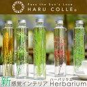 ハーバリウム スタンダードタイプ | グリーン 浮游花 ふゆか プリザーブドフラワー ギフト ドライフラワー 観葉植物 …
