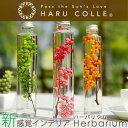 ハーバリウム スタンダードタイプ | 浮游花 ふゆか ペッパーベリー プリザーブドフラワー ギフト ドライフラワー 観葉…