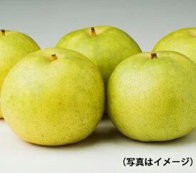 【二十世紀梨 7玉】お中元/贈り物/ギフト