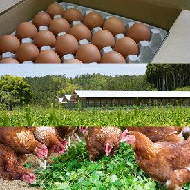 蓮ヶ峯農場の平飼いたまご50個入り オーガニック 有機 平飼い卵 自家配合 非遺伝子組み換え飼料 京都