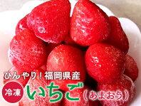 福岡県産冷凍いちご(あまおう)400g 無添加( 冷凍 いちご イチゴ 苺 ジャム 手作り フルーツ 無添加 トースト )