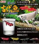 【1S】【ネコポス可】TOYSSPIRITS浮くぞ!古代魚ざ・ぷっかりマスコット全5種セット