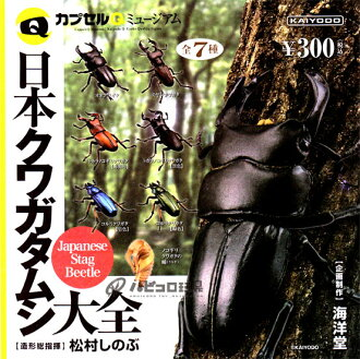 Five kinds of sets with KAIYODO capsule Q museum Japan stag beetle encyclopedia