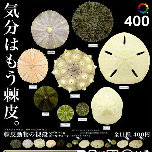 いきもん ネイチャーテクニカラー MONO PLUS 棘皮動物の裸殻 マグネット&ボールチェーン 8種アソートセット