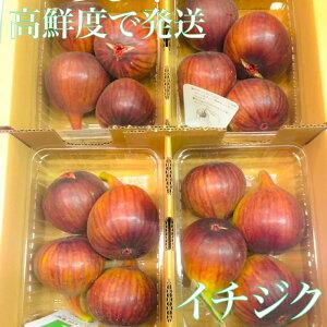 美味 ジャムや色々な料理に使える イチジク 柔らかく甘い 鮮度命 いちじく 箱売り 奈良 和歌山 兵庫 福岡 など