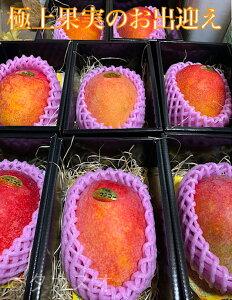 国産マンゴー 2個 約400g×2 大切に育てられた太陽の恵み 宝石の様な果実 母の日 ギフト 2Lサイズ 5月1から順次発送