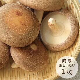 生しいたけ 山形県小国町産 菌床栽培 1kg 椎茸 お徳用