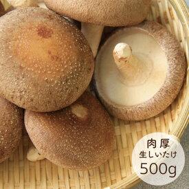 生しいたけ 山形県小国町産 菌床栽培 500g 椎茸
