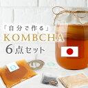 コンブチャクレンズ コンブチャ キット スコビー スコービー 紅茶きのこ 紅茶キノコ マザー こんぶ茶 kombucha 腸活 …