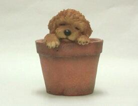 【置物】いねむり小犬 トイプードル(レッド)[g1]【クーポン配布店舗】