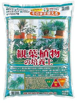 観葉植物の培養土約10L