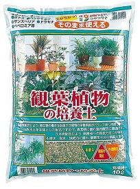 観葉植物の培養土 約10L[g7]【クーポン配布店舗】
