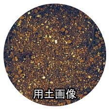 『シクラメンの培養土約10L』[g7]