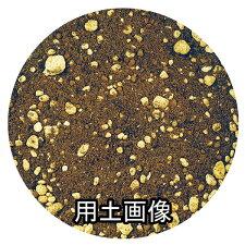 ブルーベリーの培養土約5L[g2.5]