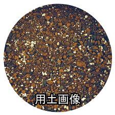 パンジー・ペチュニアの培養土約5L[g3]