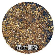 アロエ・金の成る木の培養土約5L[g3]