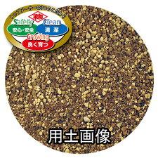 SCG観葉植物の培養土約5L[g3]
