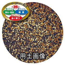 SCGハイビスカス&夏の花の培養土約5L[g3]