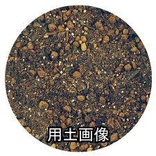 菊の土約14L[g8]