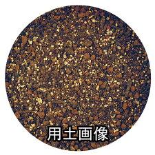 いちごの培養土約10L[g6.5]