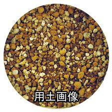 クンシランの培養土約10L[g6]