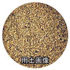 サボテン・多肉植物の培養土約10L[g6]
