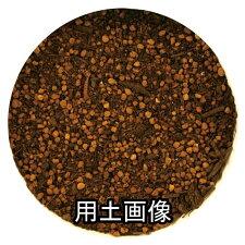 オリーブの培養土25L[g13]
